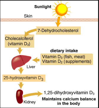 All About Vitamin D Measure Up